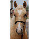 Mustang Knotted Training Halter