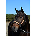 Partade Full Black Halter With Leather